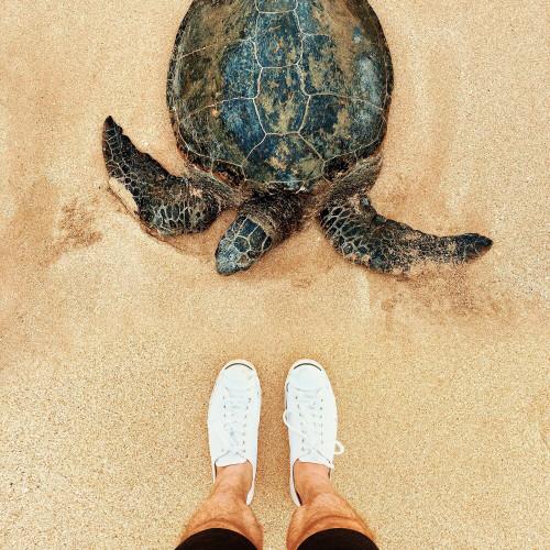 turtle jouw redding